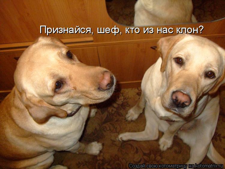 Котоматрица: Признайся, шеф, кто из нас клон?