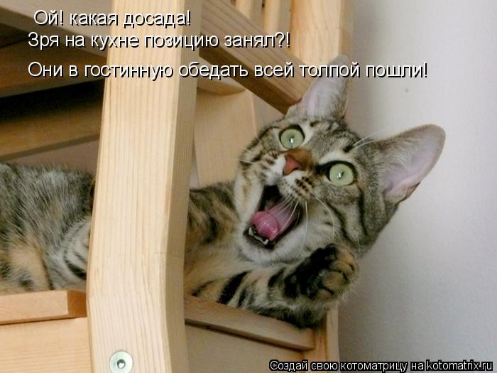 Котоматрица: Ой! какая досада! Зря на кухне позицию занял?! Они в гостинную обедать всей толпой пошли!