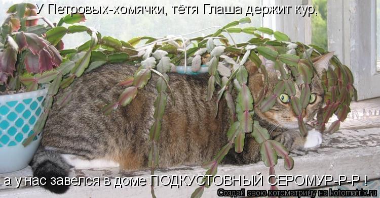 У Петровых-хомячки, тётя Глаша держит кур, а у нас завелся в доме ПОДК