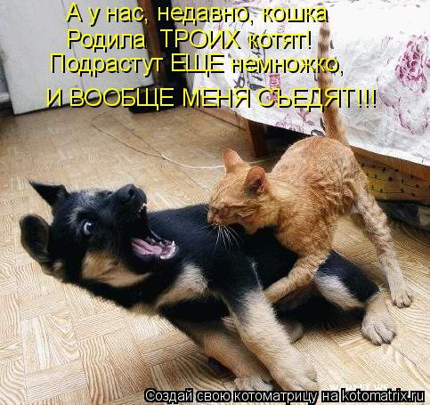 Котоматрица: А у нас, недавно, кошка Родила  ТРОИХ котят! Подрастут ЕЩЕ немножко, И ВООБЩЕ МЕНЯ СЪЕДЯТ!!!