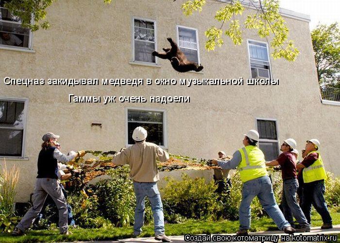 Спецназ закидывал медведя в окно музыкальной школы Гаммы уж очень надо