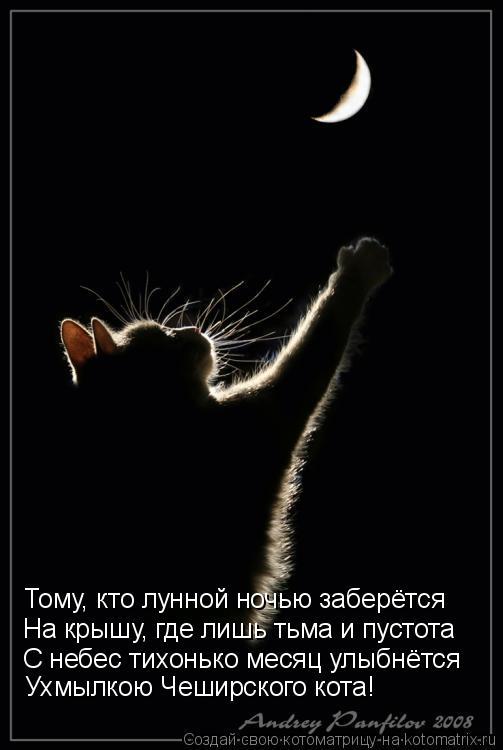 Котоматрица: Тому, кто лунной ночью заберётся  На крышу, где лишь тьма и пустота  С небес тихонько месяц улыбнётся  Ухмылкою Чеширского кота!