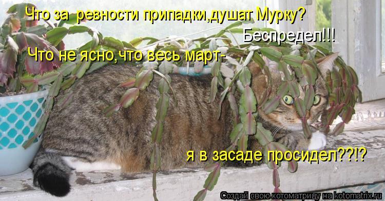 Котоматрица: Что за  ревности припадки,душат Мурку? Беспредел!!! Что не ясно,что весь март- я в засаде просидел??!?
