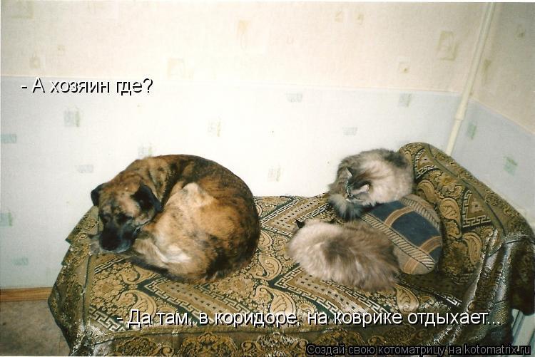 Котоматрица: - А хозяин где? - Да там, в коридоре, на коврике отдыхает...
