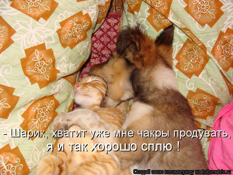 Котоматрица: я и так хорошо сплю ! - Шарик, хватит уже мне чакры продувать,