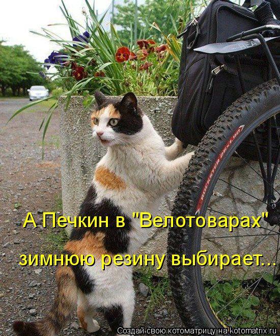 """Котоматрица: А Печкин в """"Велотоварах"""" зимнюю резину выбирает..."""