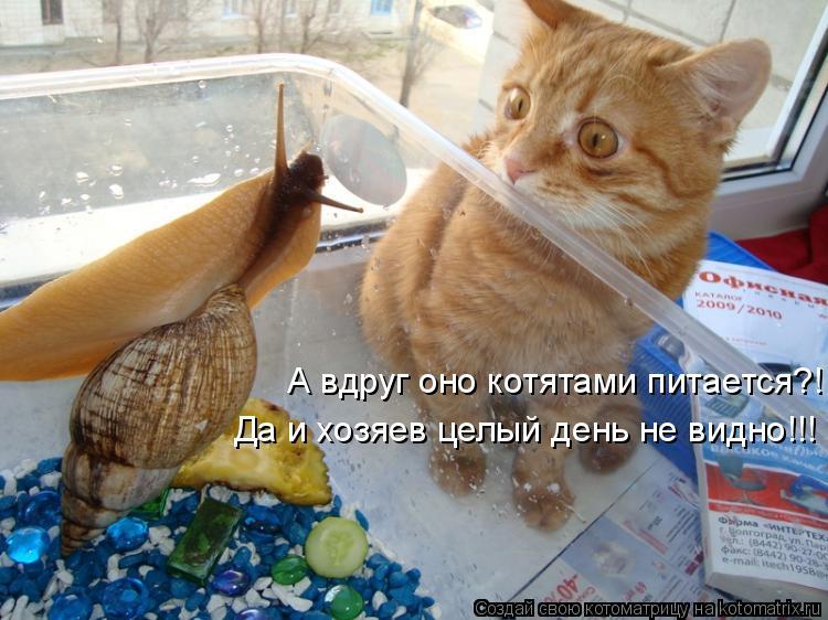 А вдруг оно котятами питается?! Да и хозяев целый день не видно!!!