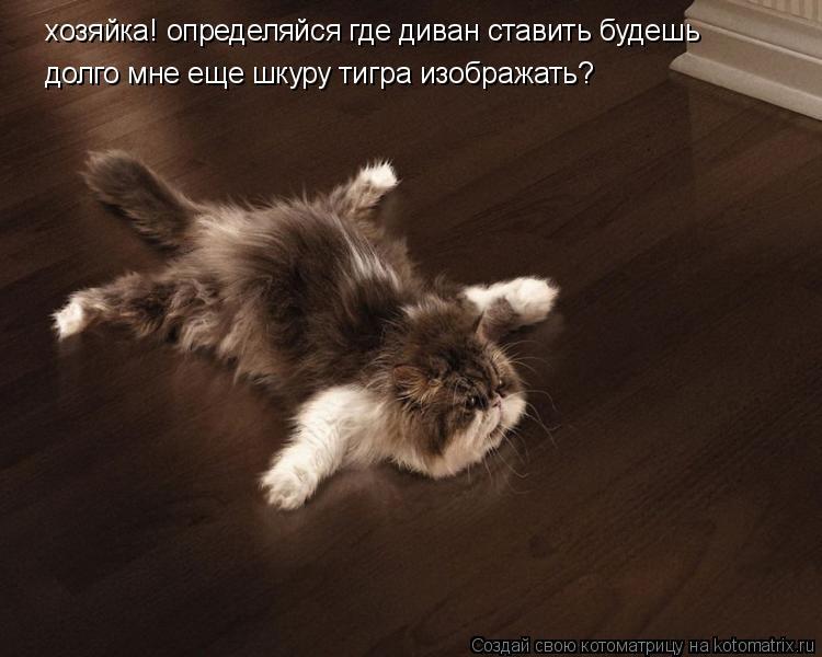 хозяйка! определяйся где диван ставить будешь долго мне еще шкуру тигр