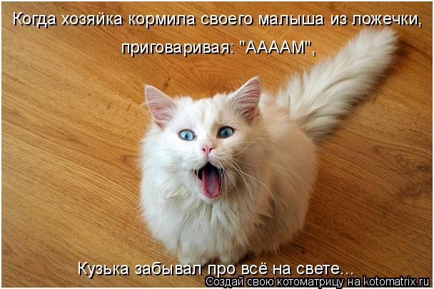 """Котоматрица: Когда хозяйка кормила своего малыша из ложечки, приговаривая: """"ААААМ"""",  Кузька забывал про всё на свете..."""