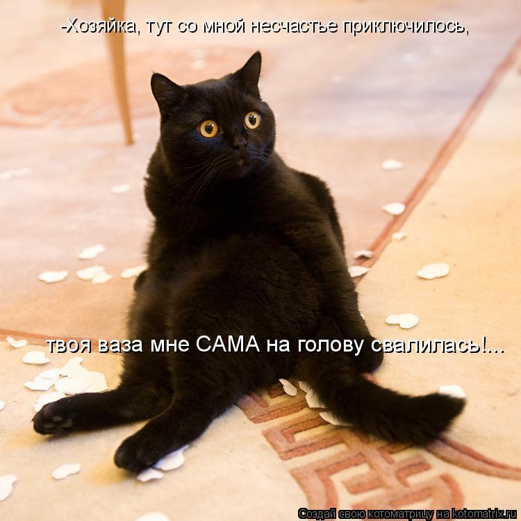 Котоматрица: -Хозяйка, тут со мной несчастье приключилось, твоя ваза мне САМА на голову свалилась!...