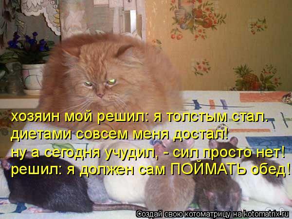 Котоматрица: хозяин мой решил: я толстым стал. диетами совсем меня достал! ну а сегодня учудил, - сил просто нет! решил: я должен сам ПОЙМАТЬ обед!