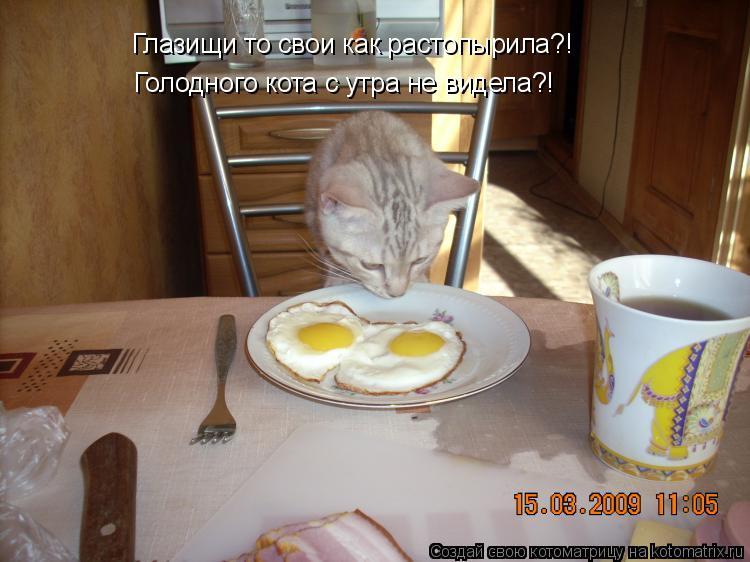 Котоматрица: Глазищи то свои как растопырила?! Голодного кота с утра не видела?!