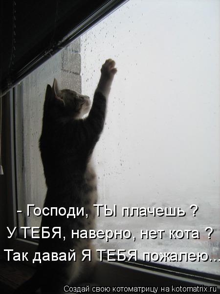 Котоматрица: - Господи, ТЫ плачешь ? У ТЕБЯ, наверно, нет кота ? Так давай Я ТЕБЯ пожалею...
