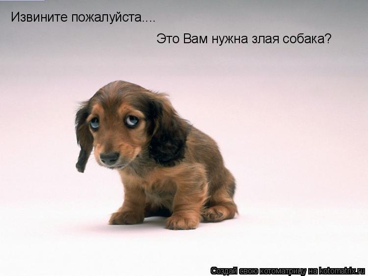 Извините пожалуйста.... Это Вам нужна злая собака?