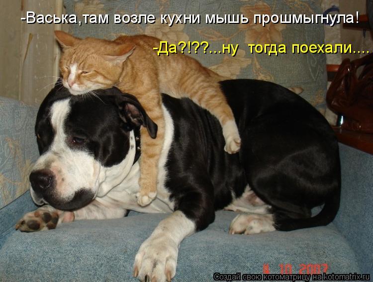 -Васька,там возле кухни мышь прошмыгнула! -Да?!??...ну тогда поехали.