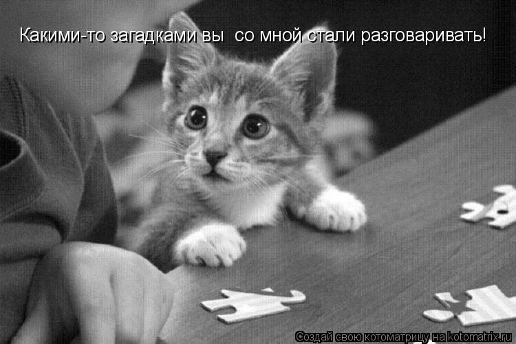 Котоматрица: Какими-то загадками вы  со мной стали разговаривать!
