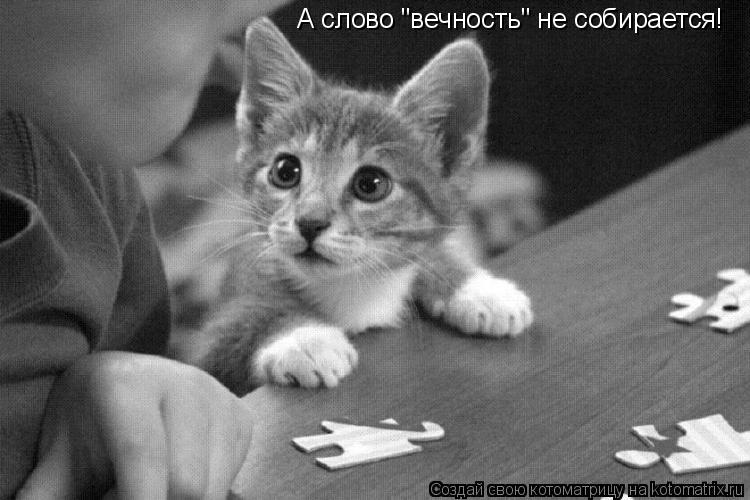 """Котоматрица: А слово """"вечность"""" не собирается!"""