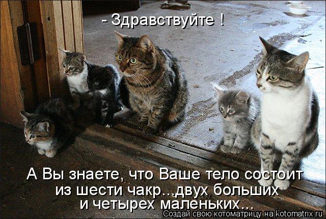 Котоматрица: - Здравствуйте !  А Вы знаете, что Ваше тело состоит из шести чакр...двух больших и четырех маленьких...