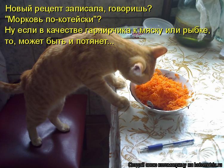 """Котоматрица: Новый рецепт записала, говоришь?  """"Морковь по-котейски""""? Ну если в качестве гарнирчика к мяску или рыбке, то, может быть и потянет..."""