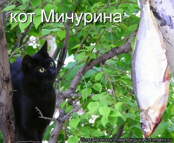 Котоматрица: кот Мичурина