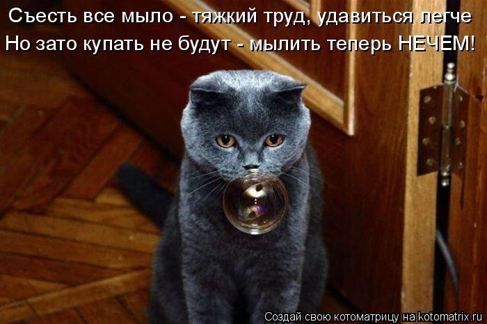 Котоматрица: Съесть все мыло - тяжкий труд, удавиться легче Но зато купать не будут - мылить теперь НЕЧЕМ!