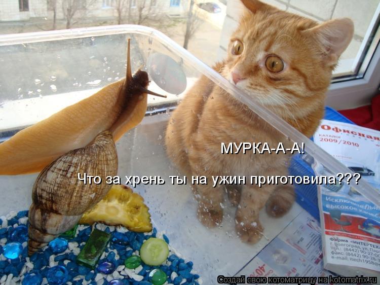Котоматрица: МУРКА-А-А! Что за хрень ты на ужин приготовила???