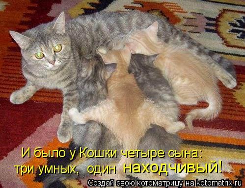 И было у Кошки четыре сына: находчивый! три умных, один