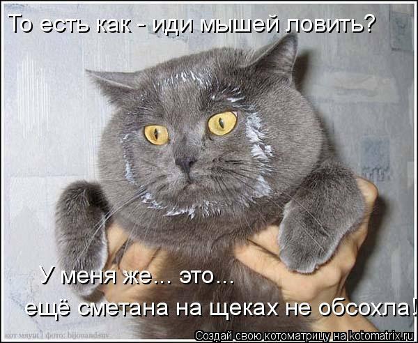 Котоматрица: То есть как - иди мышей ловить? У меня же... это... ещё сметана на щеках не обсохла!
