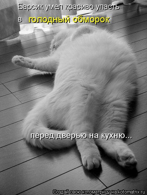 Котоматрица: Барсик умел красиво упасть  в   голодный обморок перед дверью на кухню...