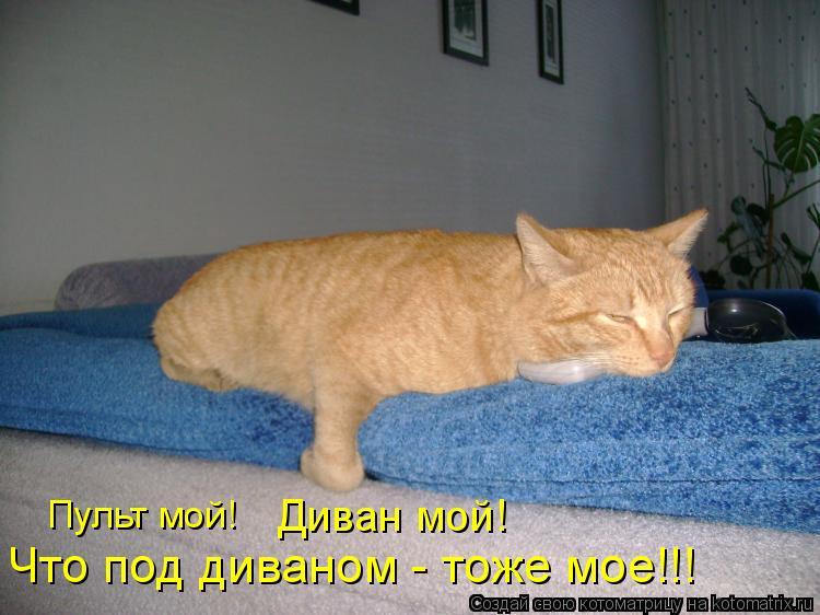 Котоматрица: Диван мой! Что под диваном - тоже мое!!! Пульт мой!