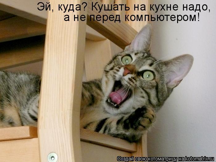 Котоматрица: Эй, куда? Кушать на кухне надо,  а не перед компьютером!