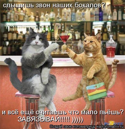 Котоматрица: слышишь звон наших бокалов? и всё ещё считаешь что мало пьёшь? ЗАВЯЗЫВАЙ!!!!! )))))