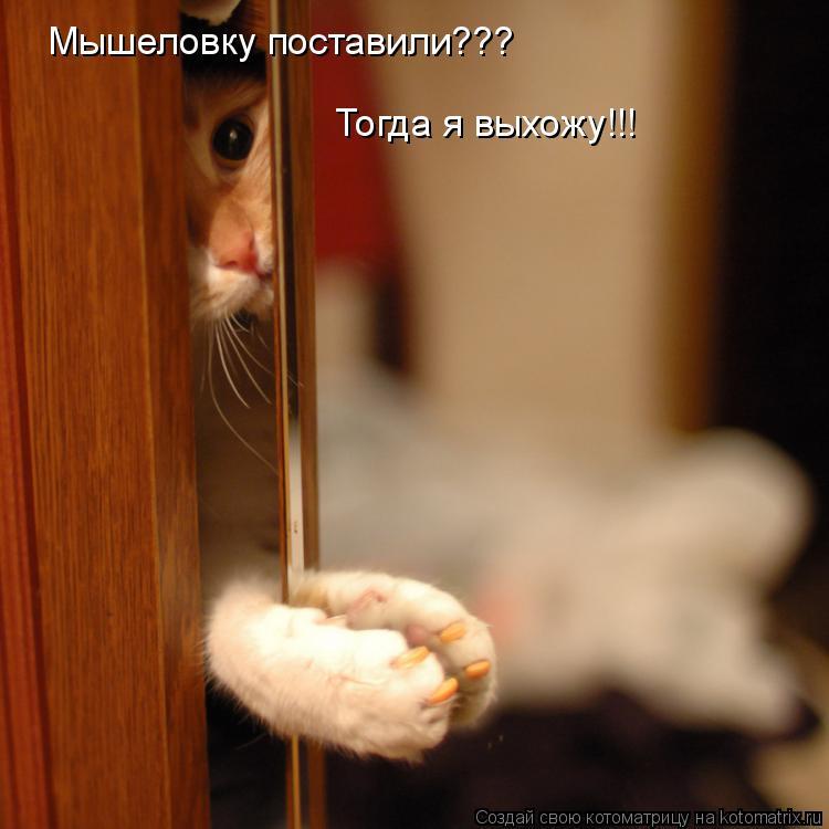 Котоматрица: Мышеловку поставили??? Тогда я выхожу!!!