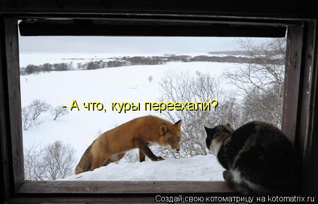 Котоматрица: - А что, куры переехали?