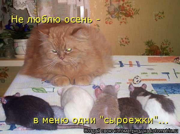 """Котоматрица: Не люблю осень -  в меню одни """"сыроежки""""..."""