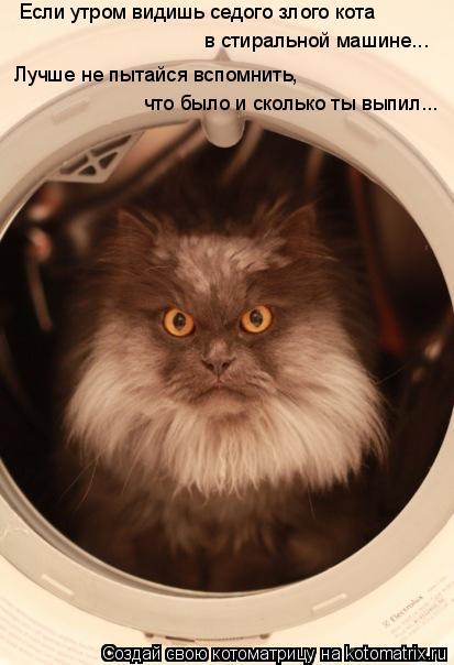 Если утром видишь седого злого кота  в стиральной машине... что было и
