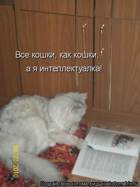 Котоматрица: Все кошки, как кошки, а я интеллектуалка! Все кошки, как кошки,                                                   а я интеллектуалка!