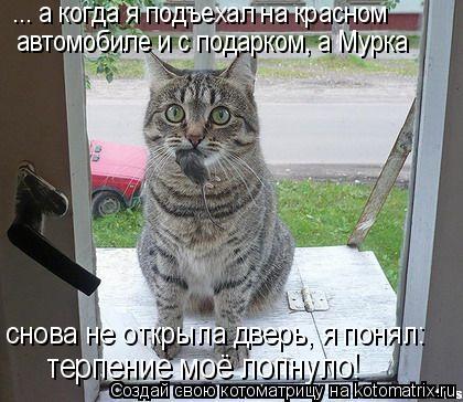 Котоматрица: ... а когда я подъехал на красном  автомобиле и с подарком, а Мурка терпение моё лопнуло! снова не открыла дверь, я понял: