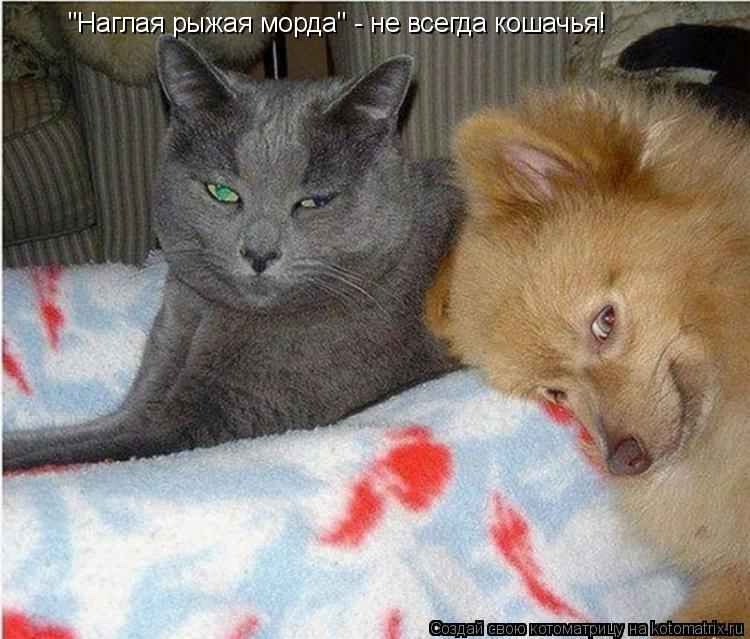 Наглая кошачья морда фото 546-472