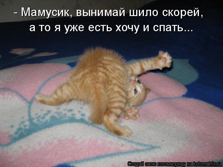 Котоматрица: а то я уже есть хочу и спать... - Мамусик, вынимай шило скорей,