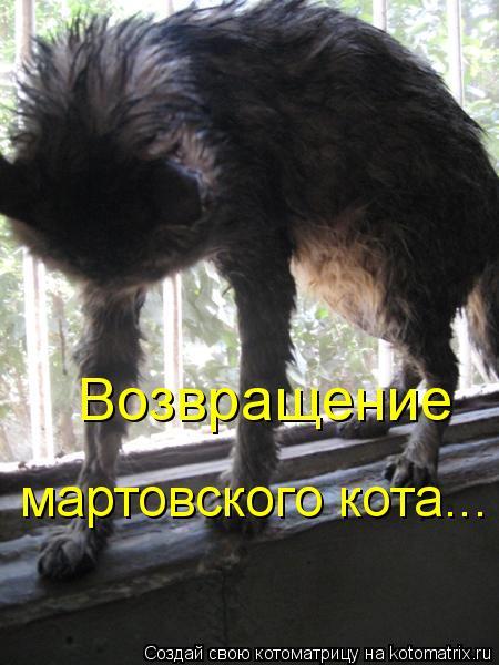Котоматрица: Возвращение  мартовского кота...