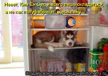 Котоматрица: Нееет, Ким Ен Сук, я всего лишь охладиться,  а не как полуфабрикат здесь лежу