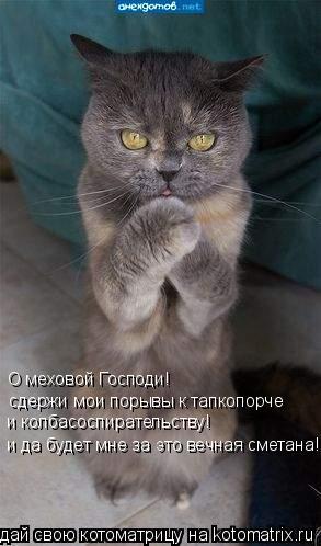 Котоматрица: О меховой Господи! сдержи мои порывы к тапкопорче и колбасоспирательству! и да будет мне за это вечная сметана!