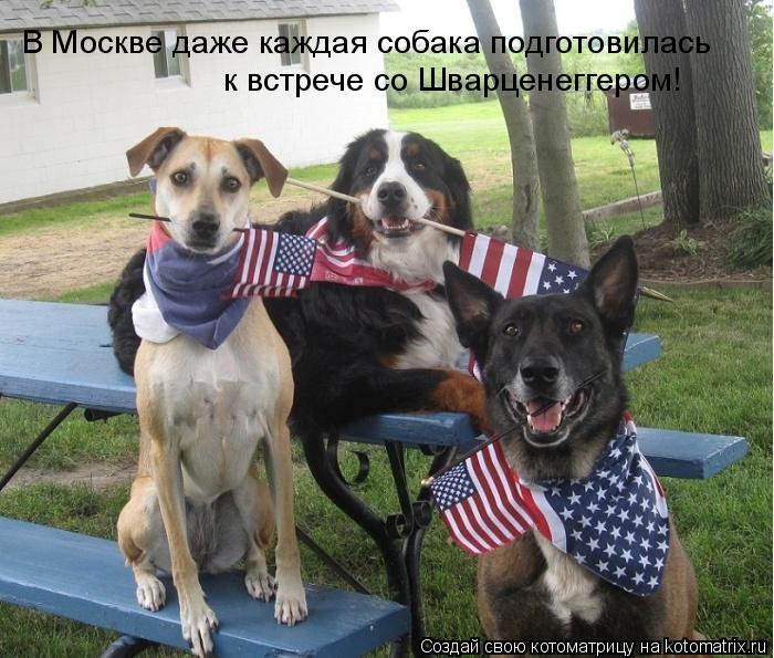 Котоматрица: В Москве даже каждая собака подготовилась  к встрече со Шварценеггером!