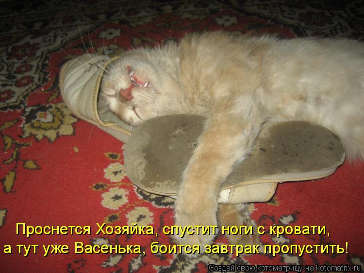 Котоматрица: Проснется Хозяйка, спустит ноги с кровати, а тут уже Васенька, боится завтрак пропустить!