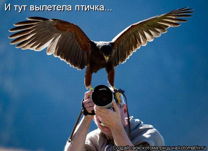 И тут вылетела птичка...
