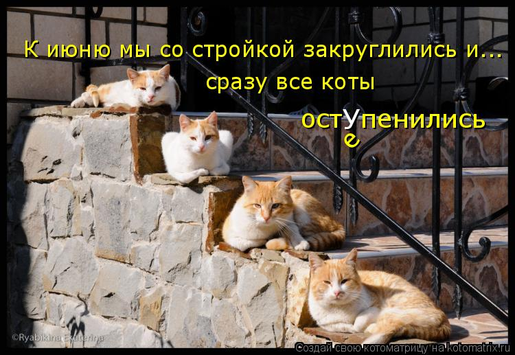Котоматрица: К июню мы со стройкой закруглились и... сразу все коты  ост  пенились У е