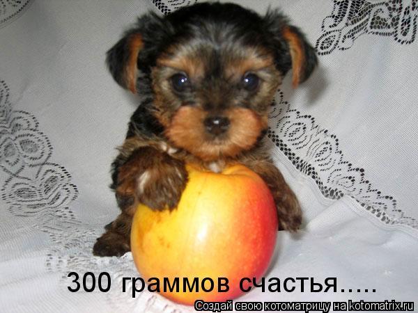 Котоматрица: 300 граммов счастья.....