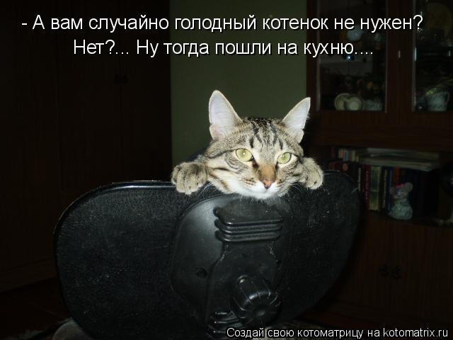 Котоматрица: - А вам случайно голодный котенок не нужен? Нет?... Ну тогда пошли на кухню....
