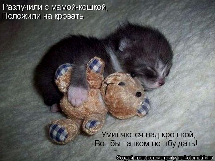 Котоматрица: Разлучили с мамой-кошкой, Положили на кровать Умиляются над крошкой, Вот бы тапком по лбу дать!